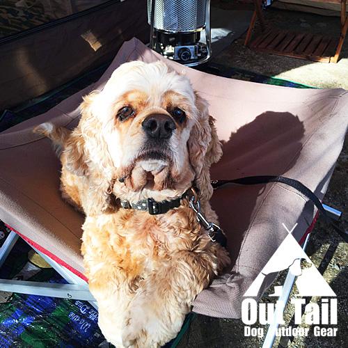 愛犬とキャンプをしよう
