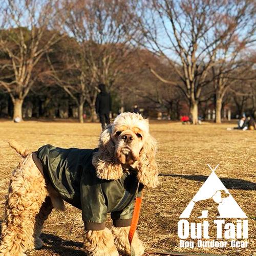 愛犬とお散歩をしよう