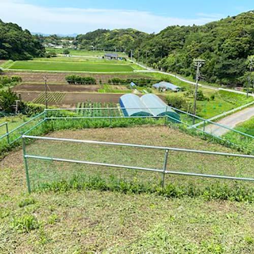 キャンプ場開拓日誌8( テントサイトのご紹介)